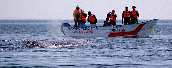 whaleho.jpg
