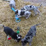 Thelma & Garths 3/21/12 litter - SAM_3322.JPG