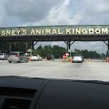 Animal Kingdom - 06072011