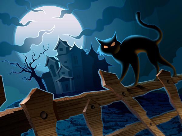 Halloween Cat, Halloween