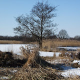 Winterkiekjes Servicetv - Ingezonden%2Bwinterfoto%2527s%2B2011-2012_62.jpg