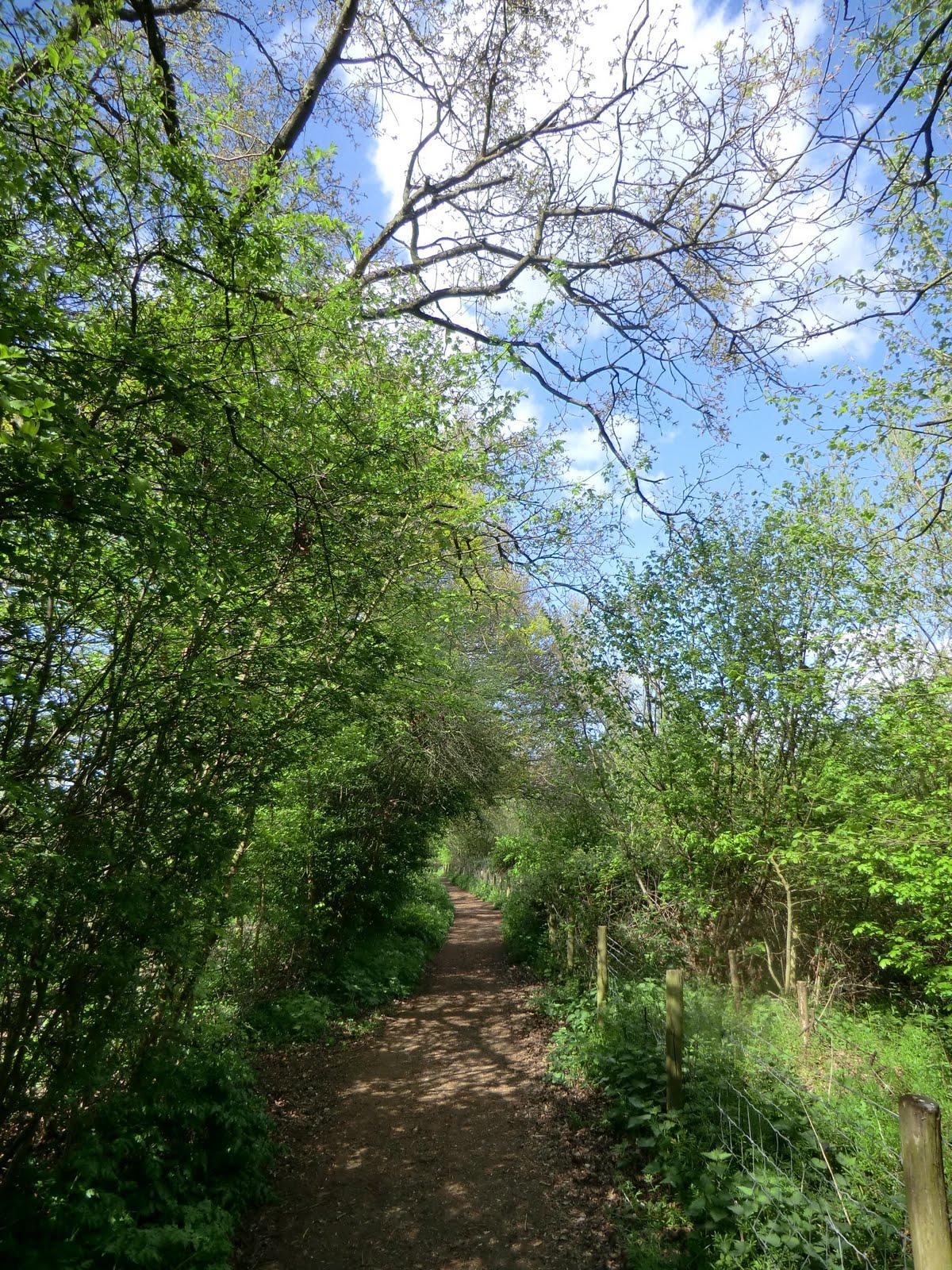 CIMG0494 Perimeter path around Moor Green Lakes