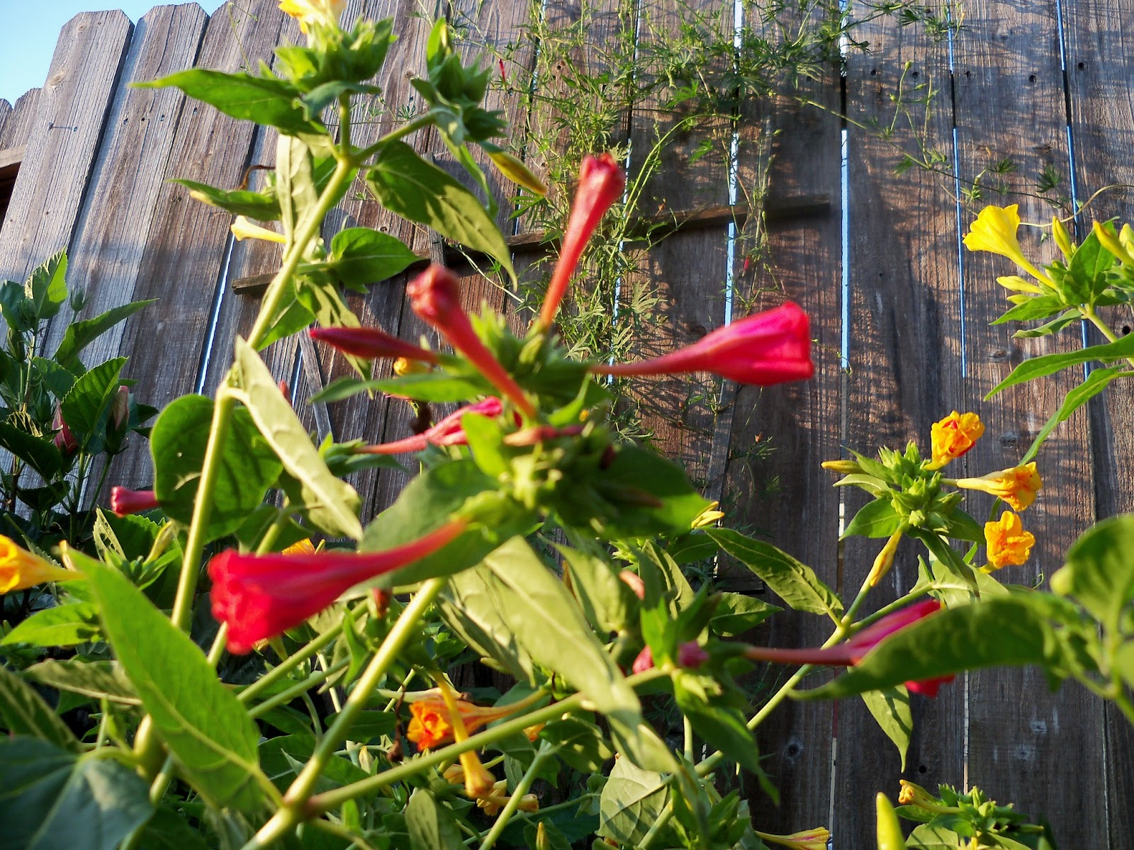 Gardening 2012 - 115_2426.JPG