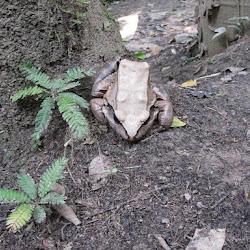 Peruvian Amazon 2010