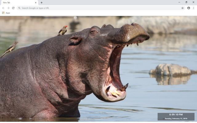 Hippo New Tab & Wallpapers Collection