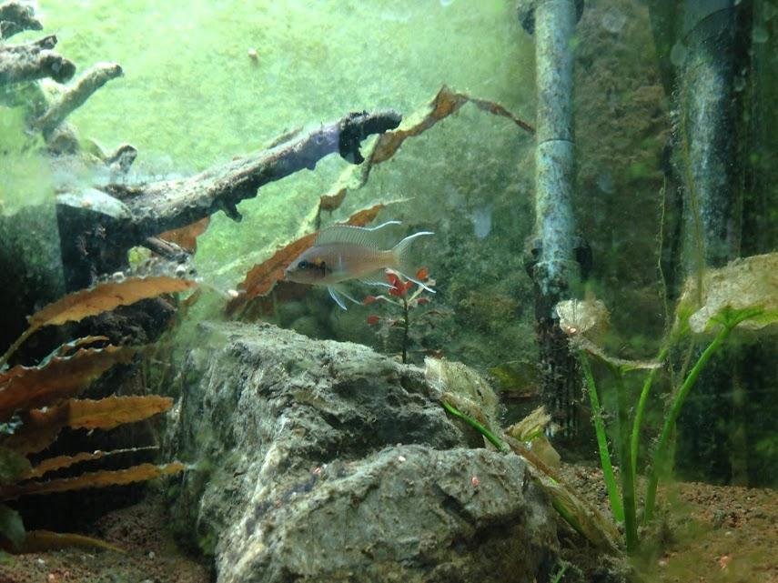 Ma petit histoire Aquariophile de 2009 à aujourd'hui  Aquarium+029
