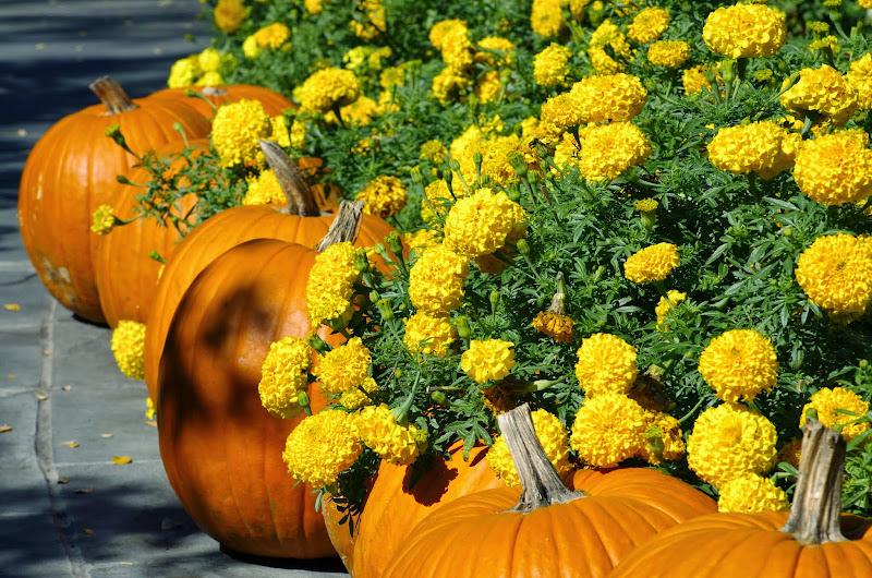 10-26-14 Dallas Arboretum - _IGP4298.JPG
