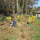 Guilford Salt Meadows Sanctuary Planting - IMG_7800.JPG