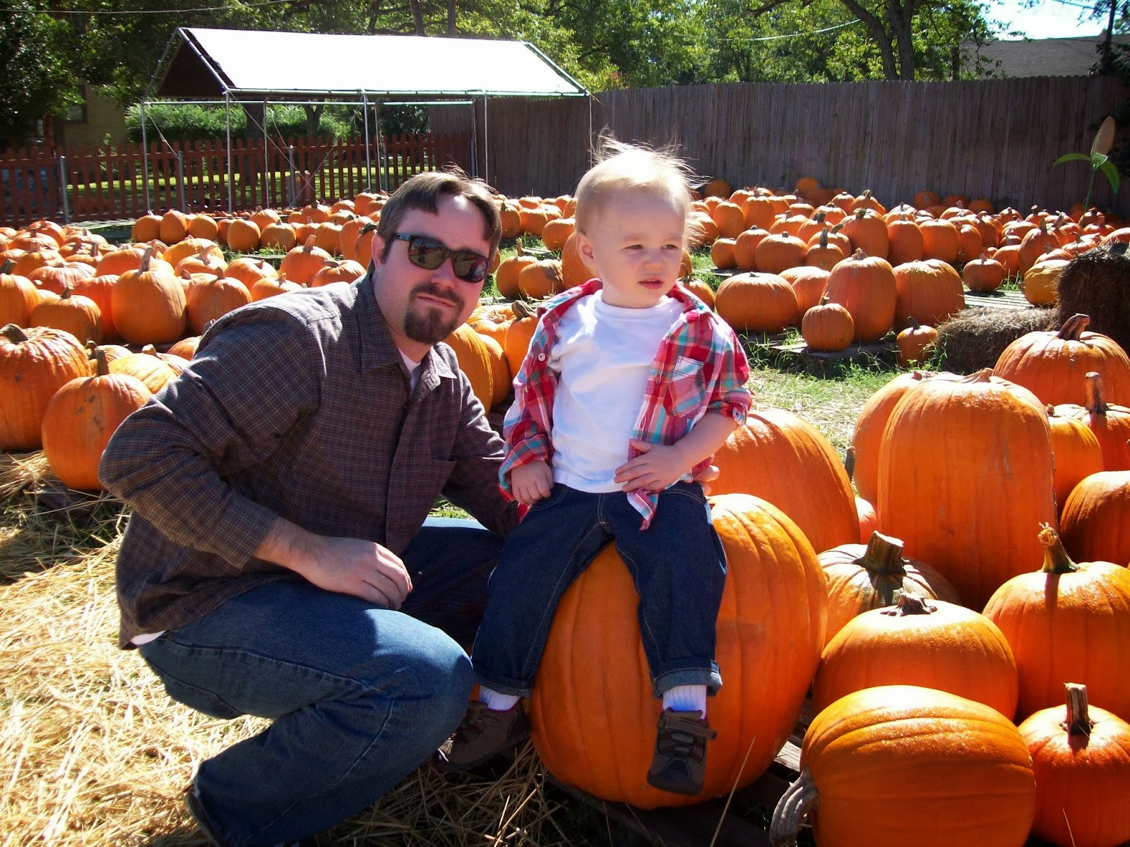 Pumpkin Patch - 114_6538.JPG
