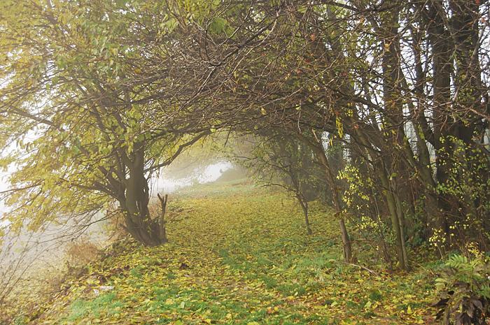 Pustnicu14.JPG