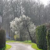 Chemin du Puits. Les Hautes-Lisières (Rouvres, 28), 23 mars 2012. Photo : J.-M. Gayman
