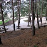 Дорожки проложенные в лесу. Сохранение и защита приствольных кругов деревьев