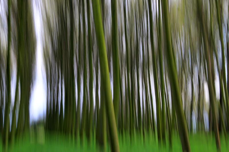 nel bosco di PaolaTizi