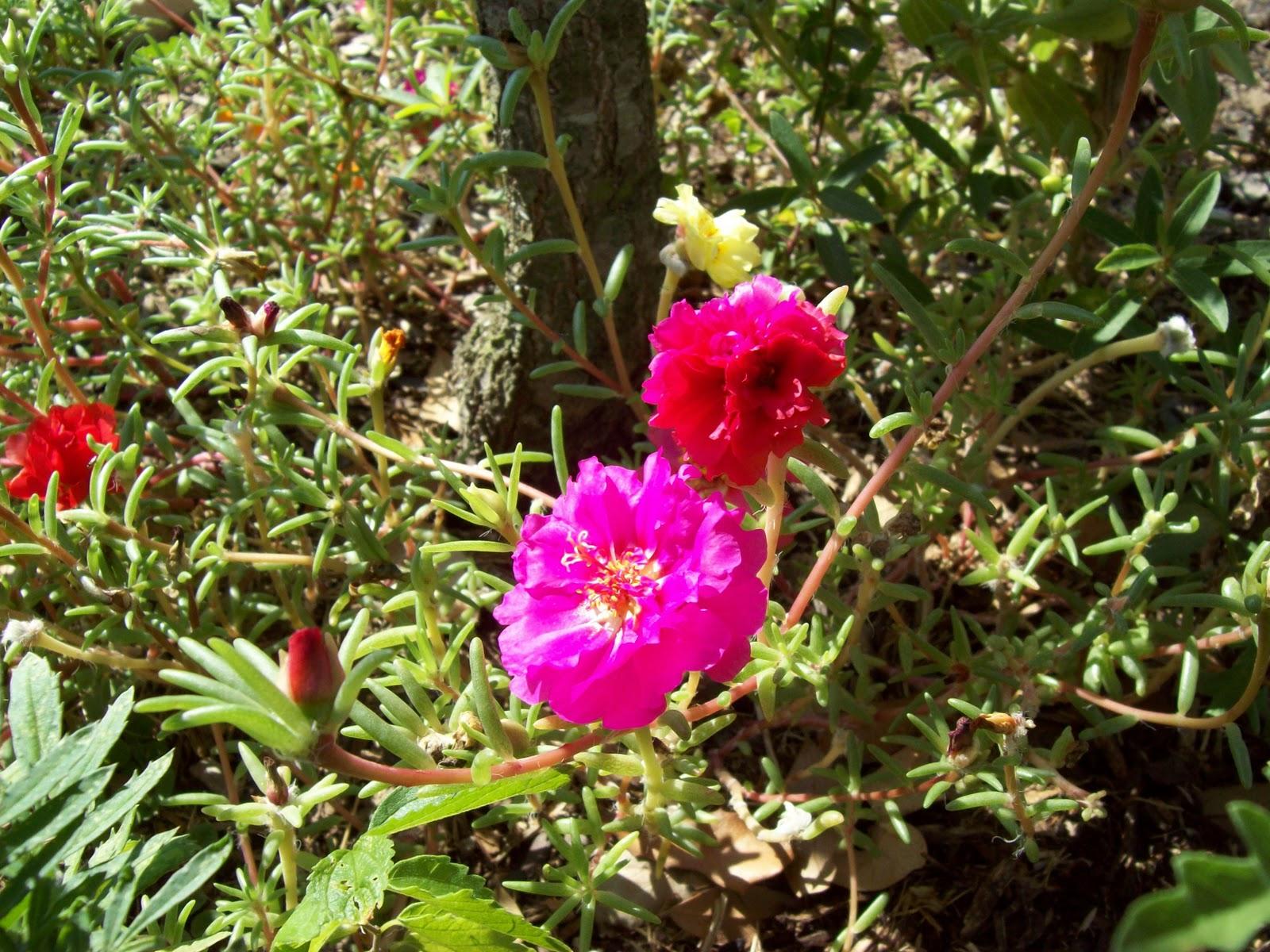 Gardening 2009 - 101_5227.JPG