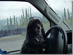 Skruffy wanting to drive the rest of the way to Dawson Creek