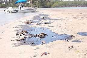 Denuncian a Pemex Por Cuestiones Ecológicas