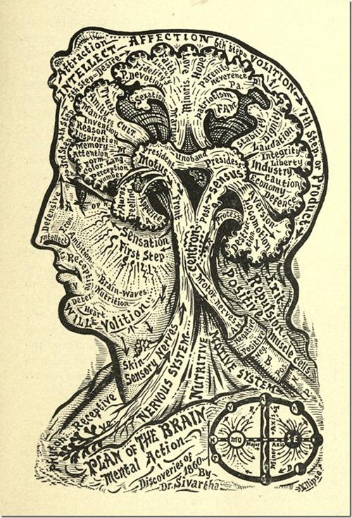 brain map 3_thumb[1]
