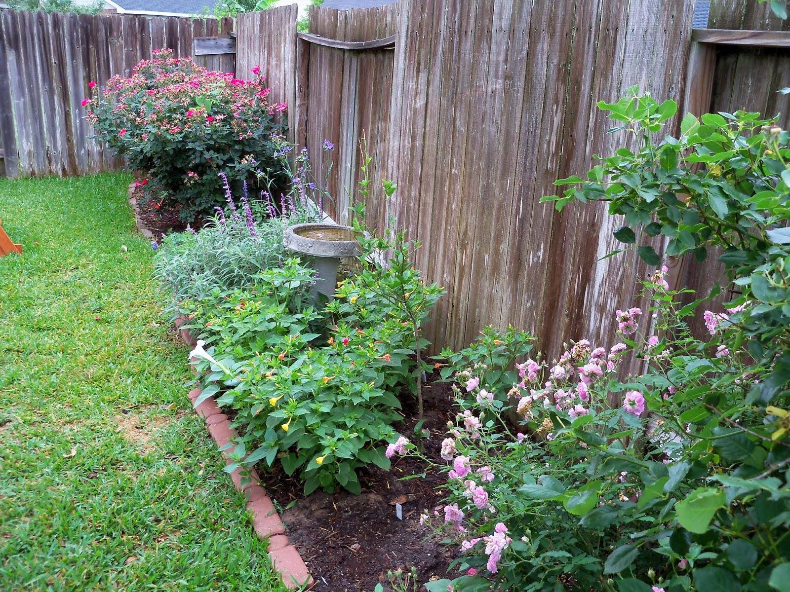 Gardening 2014 - 116_1853.JPG