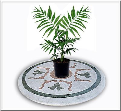 http://tunturuntun-com.blogspot.com.es/2011/03/palmera-areca-dypsis-lutescens.html