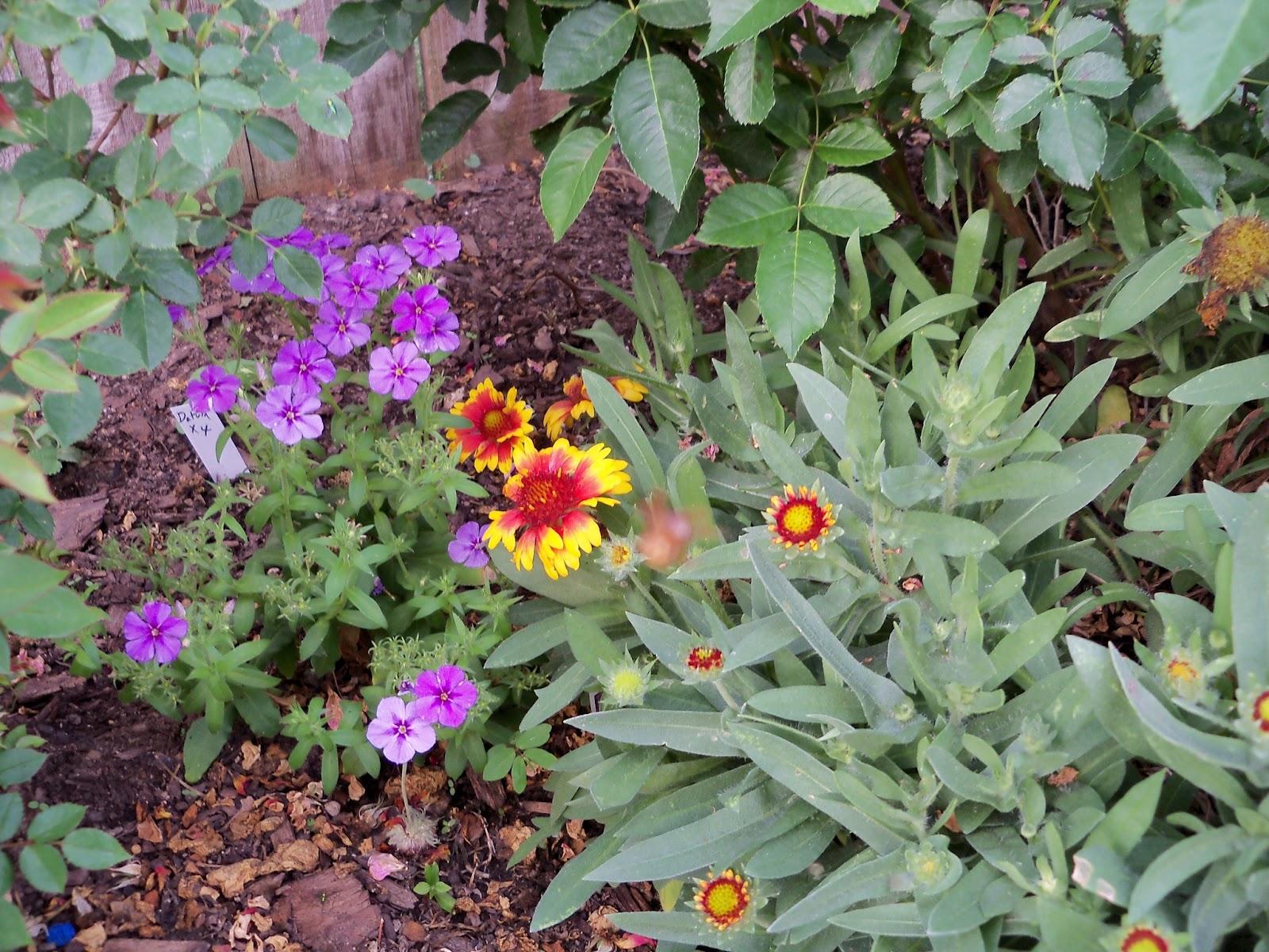 Gardening 2011 - 100_7729.JPG