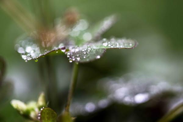 non solo gocce di pioggia