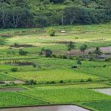 06-26-13 National Tropical Botantial Gardens - IMGP9441.JPG