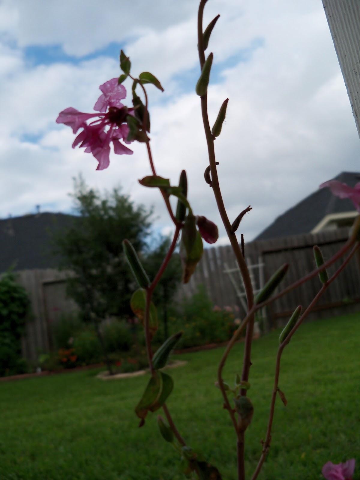 Gardening 2010, Part Three - 101_3590.JPG