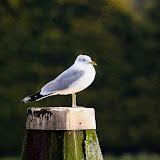Vogels en dieren