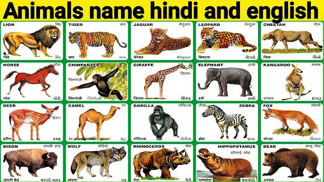 100 जानवरों के नाम हिंदी और अंग्रेजी में   100 Animals Name in Hindi and English