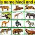 100 जानवरों के नाम हिंदी और अंग्रेजी में | 100 Animals Name in Hindi and English