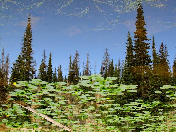 Inverted pond reflection