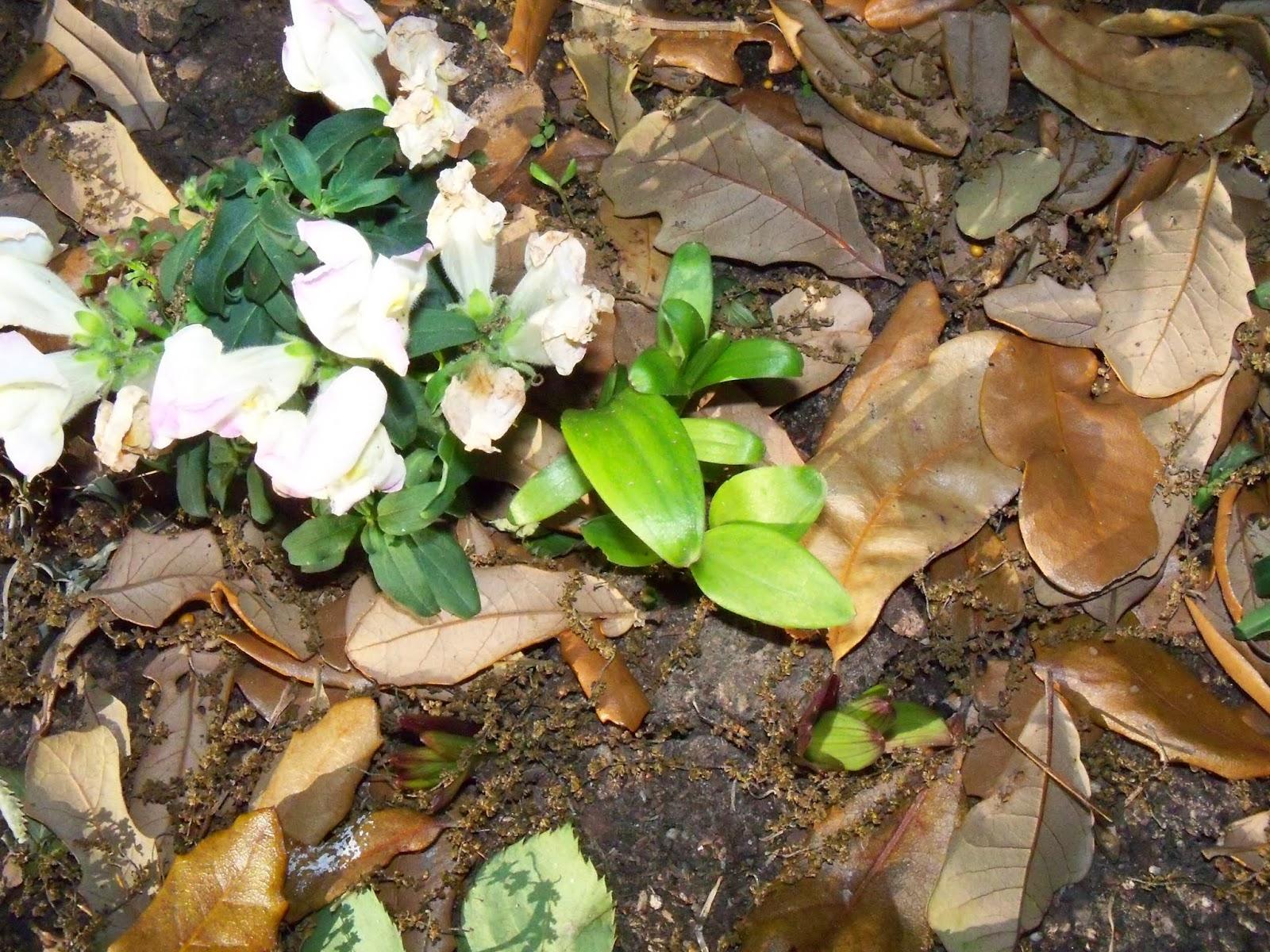 Gardening 2015 - 116_7668.JPG