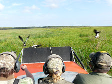 Magpie geese viewed from the Carmor Plains airboat