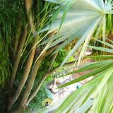 Key West Vacation - 116_5423.JPG