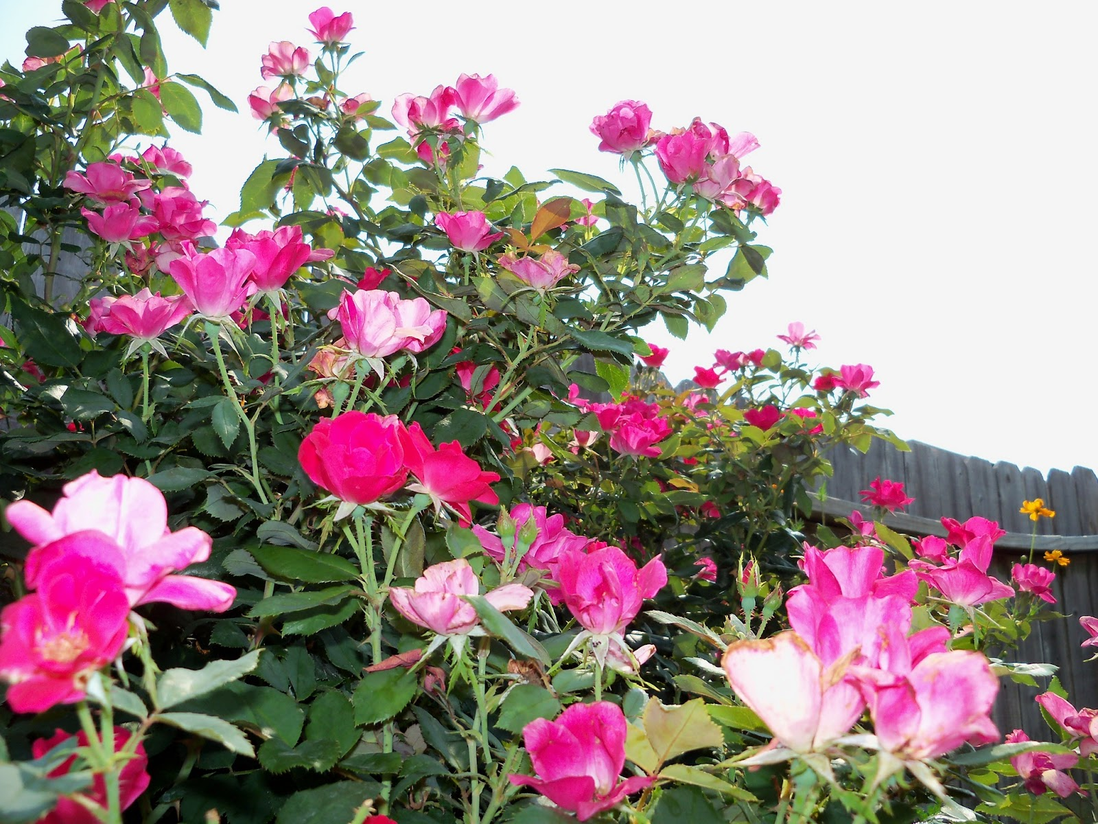Gardening 2011 - 100_9339.JPG