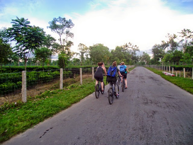 Cycling through the tea gardens at Srimangal