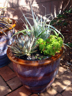 A colorful container plays well with the succulent plantings
