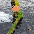20121016-01-munksjon-ducks.jpg