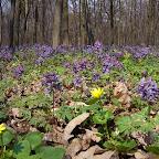 Белогорье - Заповедник лес на Ворскле 005.jpg