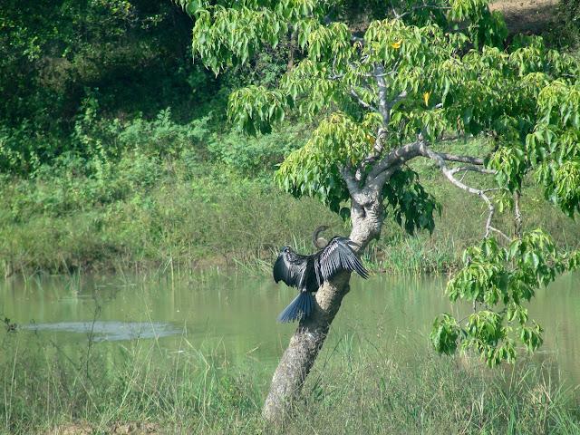 Yala-National-Park-7