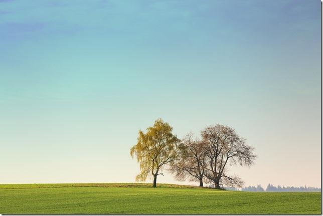 Stromy na horizontu u Hlincovy Hory