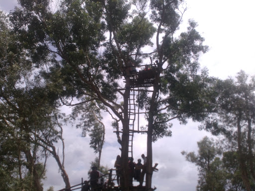 spot-foto-hutan-pinus-mangunan