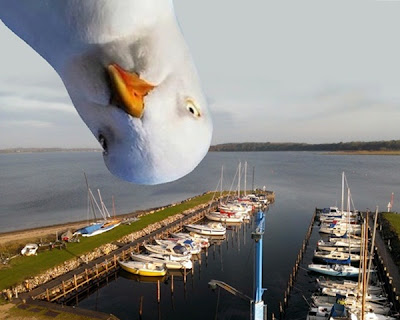 Måge - Seagull