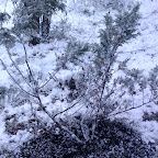 Зимняя уборка в Дендрарии 076.jpg