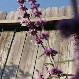 Gardening 2012 - IMG_2860.JPG