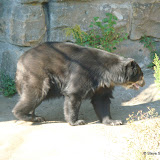Pittsburgh Zoo Revisited - DSC05195.JPG