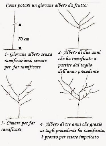 Come e quando potare gli alberi da frutto recupero di for Potatura alberi da frutto