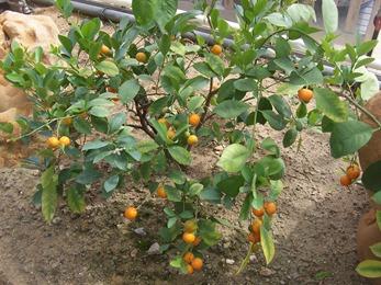 2010.08.13-004 plantes utiles