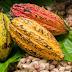 Pesquisadora do Sul da Bahia cria bioetanol à base de cacau