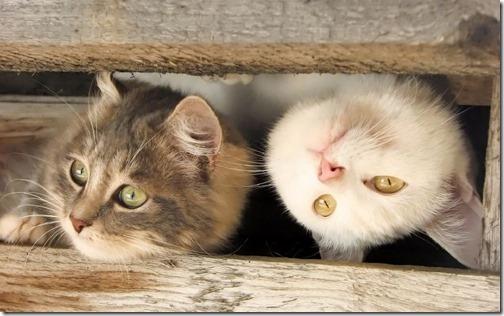 22 fotos de gats (39)